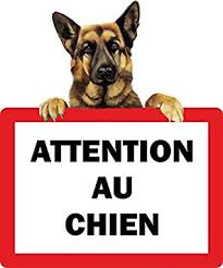attention_au_chien.jpg